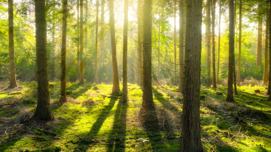bright-daylight-environment-forest-240040